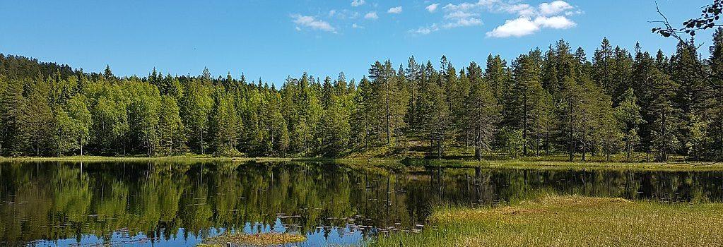 Skrattabbortjärn i Skuleskogens nationalpark.